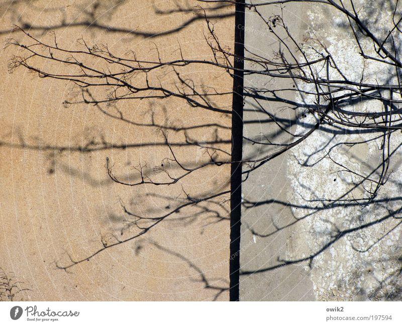 Lebenslinien Natur Pflanze Baum Ast Zweig Haus Bauwerk Gebäude Architektur Mauer Wand Fassade alt Wachstum Armut Einsamkeit stagnierend Verfall Vergänglichkeit