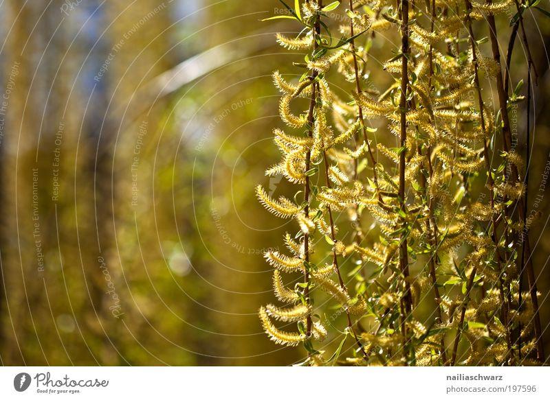 Frühling Natur Baum Blume Pflanze gelb Holz Park braun Wetter Umwelt gold Fröhlichkeit ästhetisch Sträucher Klima