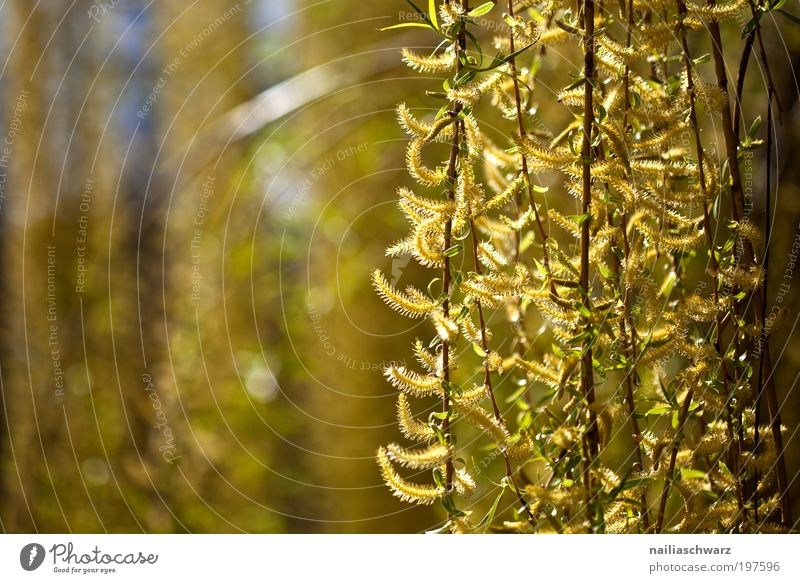Frühling Natur Baum Blume Pflanze gelb Frühling Holz Park braun Wetter Umwelt gold Fröhlichkeit ästhetisch Sträucher Klima