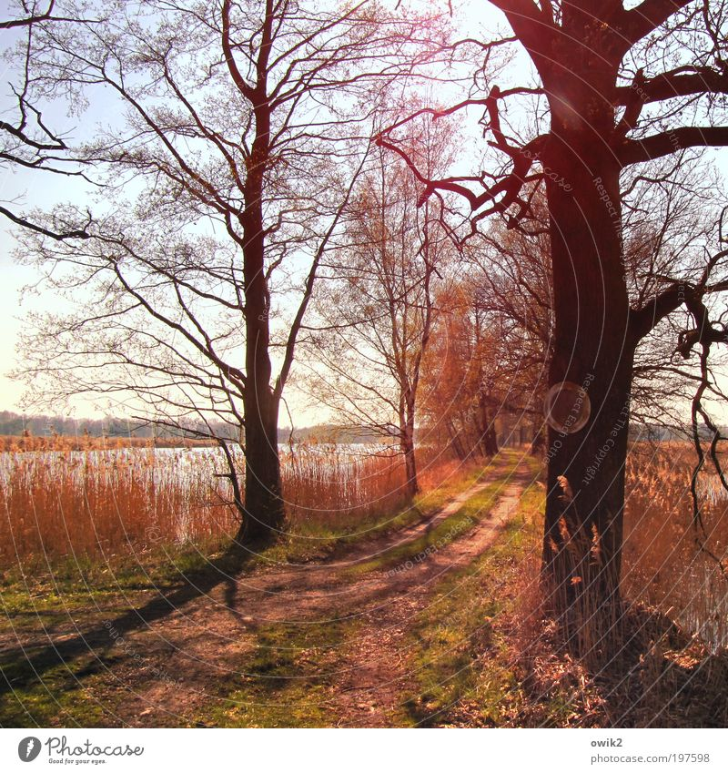 Wegweise Umwelt Natur Landschaft Pflanze Erde Wasser Wolkenloser Himmel Horizont Frühling Schönes Wetter Wärme Baum Gras Sträucher Geäst Seeufer Teich