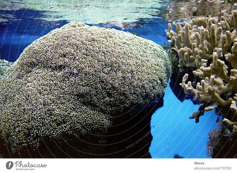 Korallen Wasser Meer