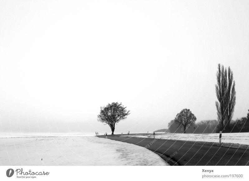 Schneelandschaft Landschaft Wolkenloser Himmel Winter Baum Feld Landstraße Romantik ruhig kalt weiß schwarz Schwarzweißfoto Außenaufnahme Menschenleer