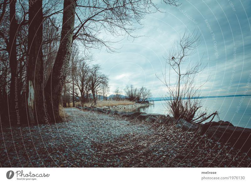 Natur am See Ausflug Freiheit Landschaft Erde Wasser Himmel Wolken Frühling Wetter Pflanze Baum Gras Sträucher Seeufer Bucht Stein Waldstück Gewässer Bodensee