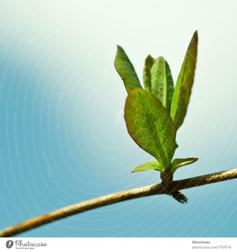 Durchbruch. Himmel Natur blau grün Baum Pflanze Blatt Tier Leben Umwelt Blüte Gesundheit Kraft frisch Erfolg Klima