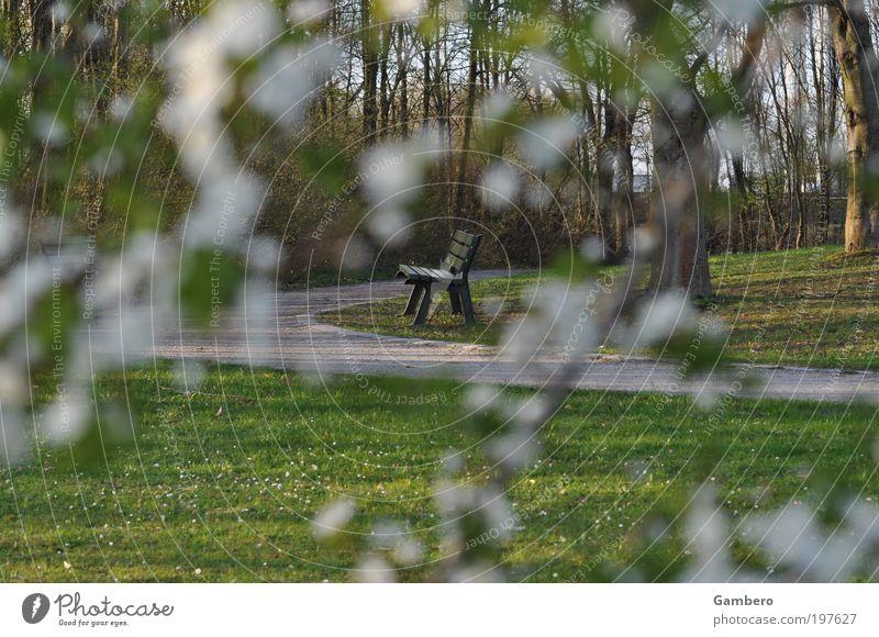Einsamkeit Natur Pflanze Baum Gras Sträucher Park Wiese Stimmung Erholung Freizeit & Hobby Kraft ruhig Zeit Farbfoto Außenaufnahme Menschenleer Abend Unschärfe