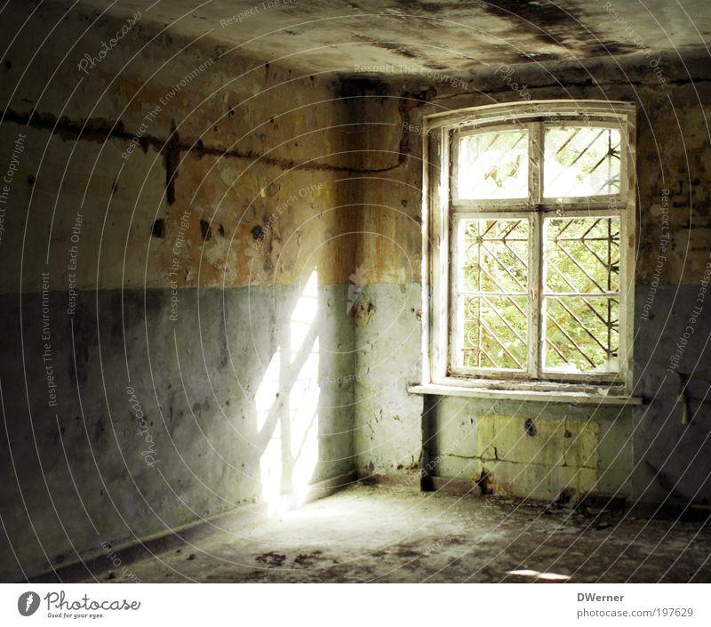 Lichtblick Natur alt Pflanze Sommer Haus kalt dunkel Wand Fenster Umwelt Architektur Stein Mauer Farbstoff Angst