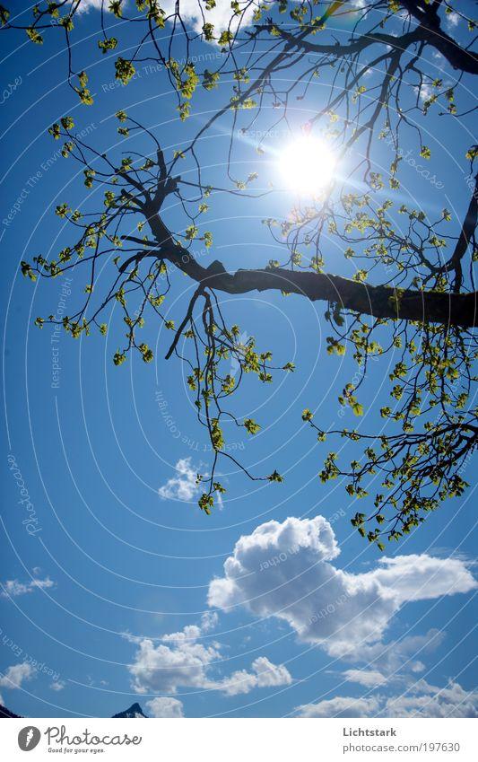vom leben und sterben IV Himmel Natur Ferien & Urlaub & Reisen blau grün Baum Sonne Wolken ruhig Umwelt Leben Frühling Holz Glück Denken Freiheit