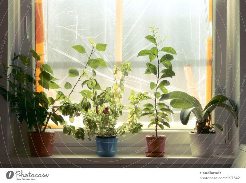 Aussichtslos grün Pflanze Blatt Fenster Raum Wohnung Perspektive Wachstum Küche Baustelle Dekoration & Verzierung Kräuter & Gewürze Häusliches Leben bauen