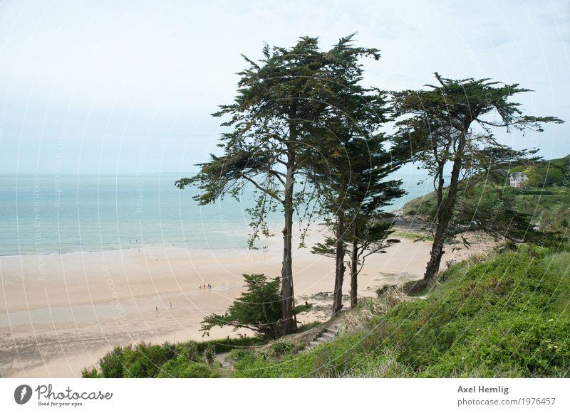 Verzauberte Normandie-Küste Landschaft Frühling Schönes Wetter Baum Strand Meer Ärmelkanal Frankreich Erholung maritim grün türkis schön ruhig Fernweh