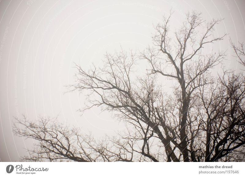 KNOCHIG Umwelt Natur Landschaft Pflanze Himmel Wolken Winter Klima schlechtes Wetter Nebel Schnee Baum Feld alt bedrohlich dunkel gruselig kalt Ende Verfall