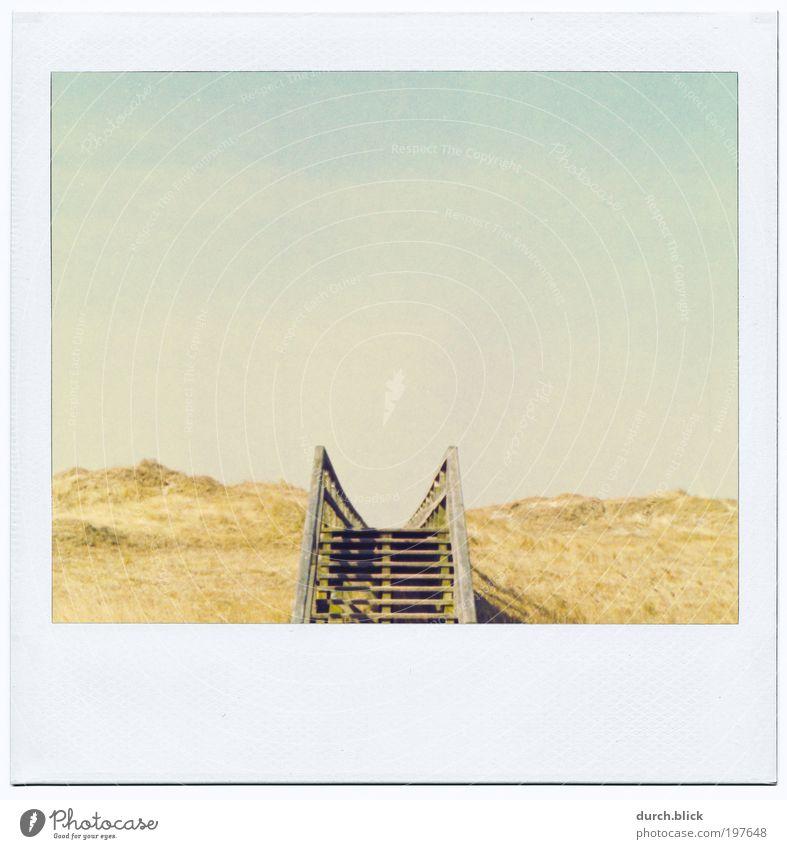 zum Horizont Natur Landschaft Sand Himmel Schönes Wetter Gras Hügel Küste Strand Nordsee Stranddüne Holz Ferne Unendlichkeit kalt retro Vorfreude Neugier