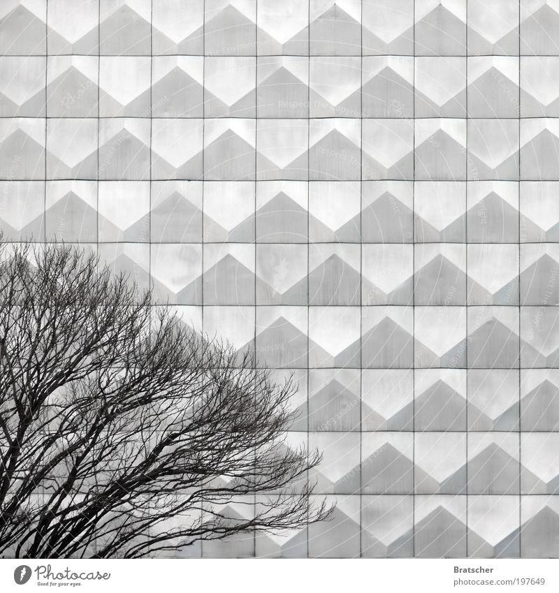 Hoyerswerda I Baum ruhig Architektur grau Stil Traurigkeit Metall Kunst Fassade Design modern Gelassenheit Gesellschaft (Soziologie) Idee Langeweile