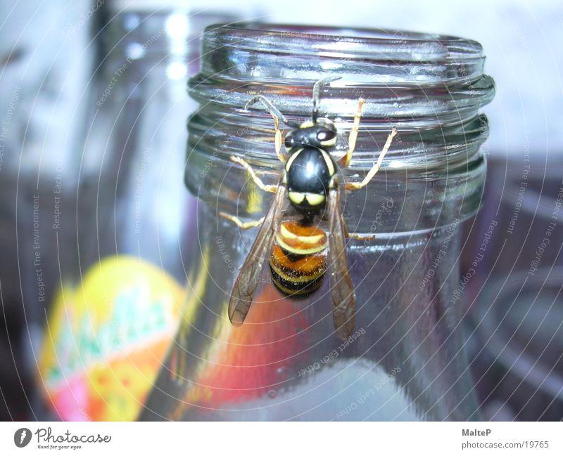 Wespe auf Futtersuche Verkehr Insekt Flasche Zucker Limonade Wespen Lebensmittel