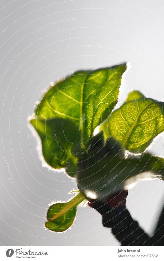 sonnensegel Umwelt Natur Pflanze Sonne Sonnenlicht Baum Blatt Park Wiese Blühend Wachstum schön Wärme grau grün Glück Hoffnung Sehnsucht Beginn Idylle
