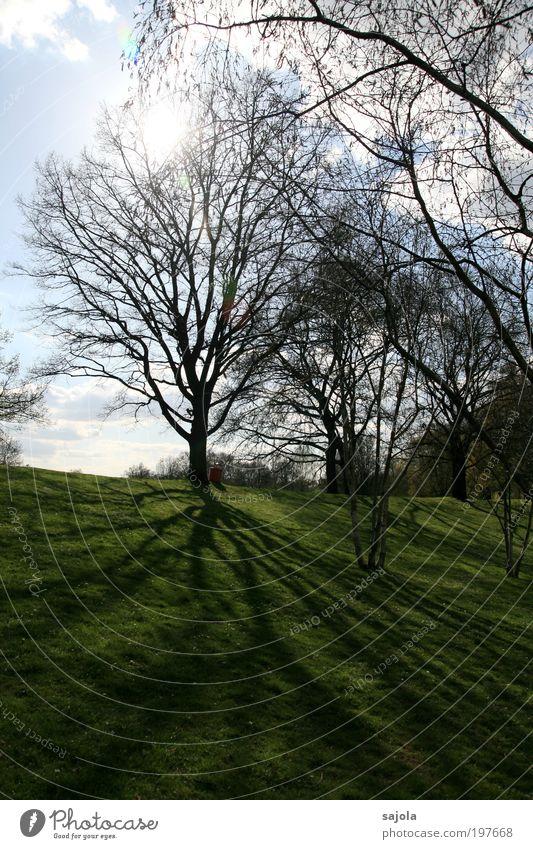 bäumig [LUsertreffen 04|10] Natur Himmel Baum grün Gras Frühling Park Umwelt ästhetisch Schönes Wetter Frühlingstag