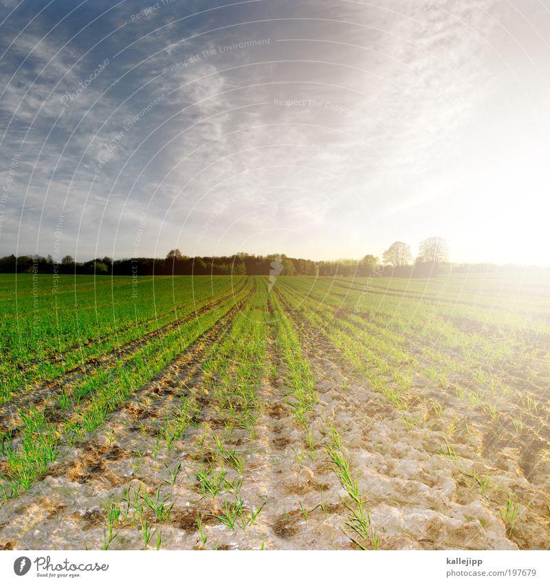 light on the horizont Himmel Natur Pflanze Sonne Landschaft Tier Umwelt Leben Frühling Arbeit & Erwerbstätigkeit Wetter Feld Erde Klima Wachstum Schönes Wetter