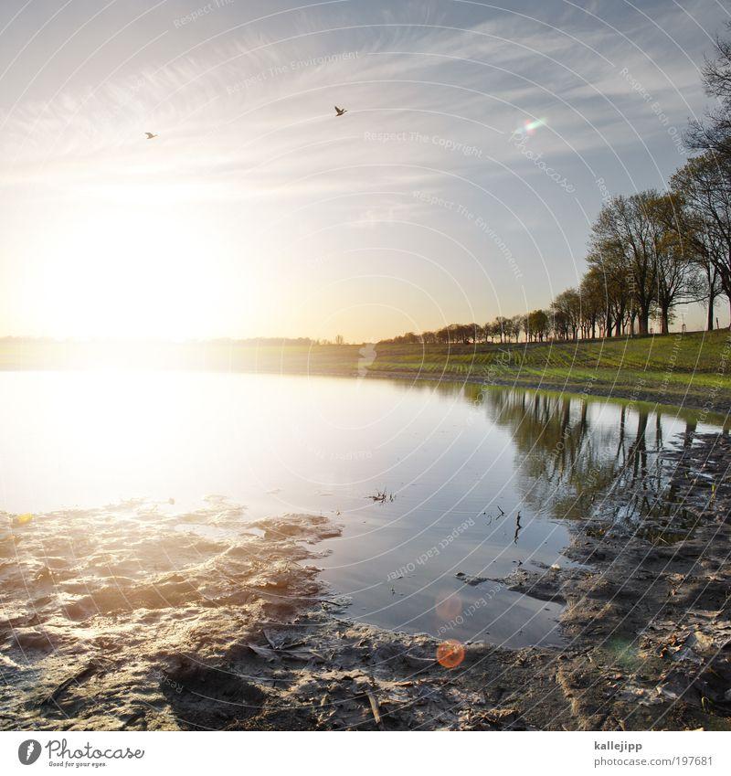 flugverbot Umwelt Natur Landschaft Pflanze Tier Erde Wasser Himmel Horizont Sonne Frühling Klima Wetter Schönes Wetter Baum Feld Teich Vogel 2 fliegen Ente