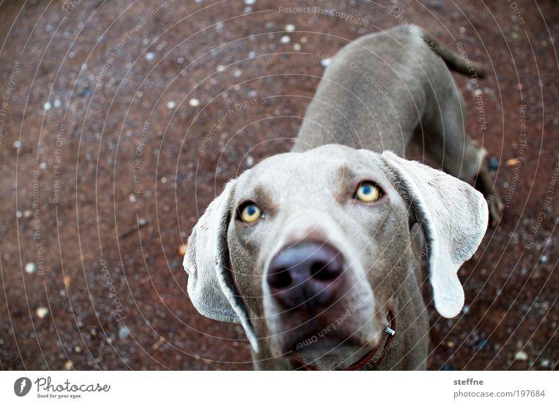 Büüüüüüüttee!!! schön Tier Hund Haustier verführerisch Aktion Tierliebe betteln flehen flehend