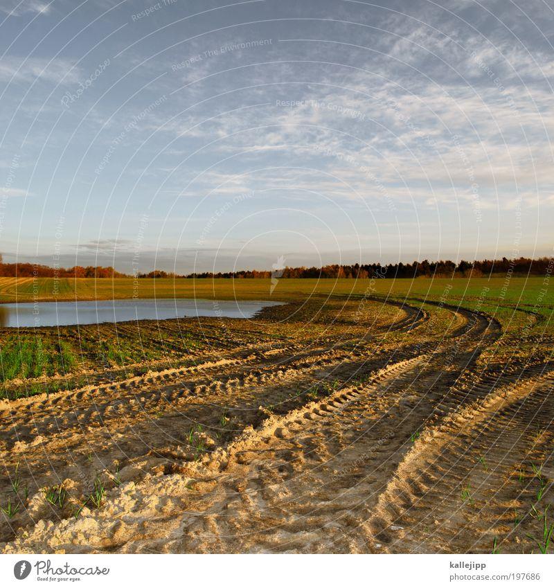 baggersee Natur Wasser Pflanze Tier Umwelt Landschaft See Arbeit & Erwerbstätigkeit Erde Feld Klima Wachstum Urelemente Zukunft Schönes Wetter Beruf