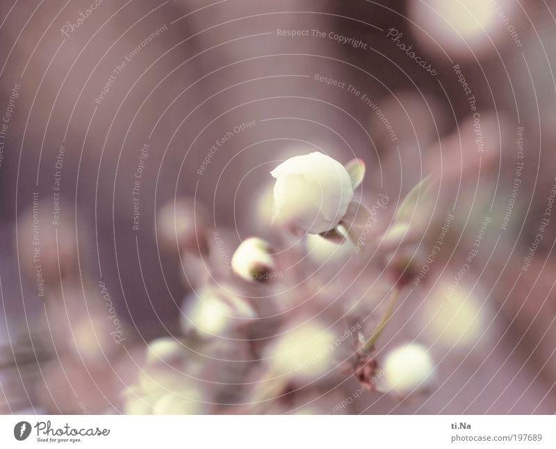 ich träumte vom Frühling... Natur schön Baum Pflanze ruhig Tier Blüte Frühling Landschaft hell Umwelt Wachstum Klima Lebensfreude Blühend Duft