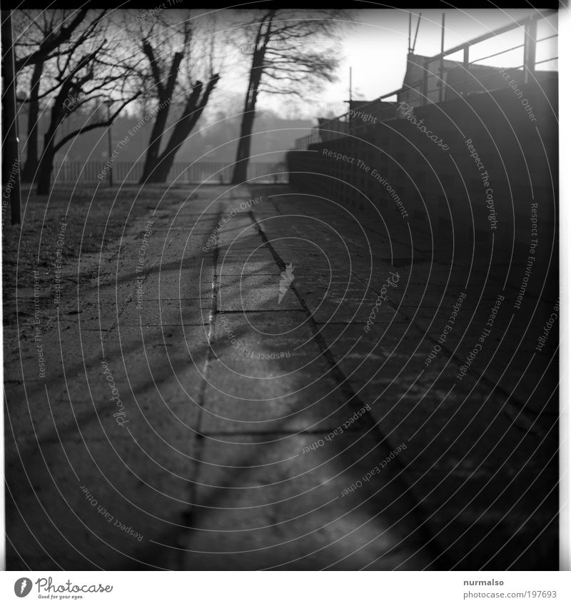 black Stones Stadt alt Baum Sonne dunkel Umwelt Lifestyle Kunst Eis stehen Beton Frost Bürgersteig Zaun Verfall Verkehrswege
