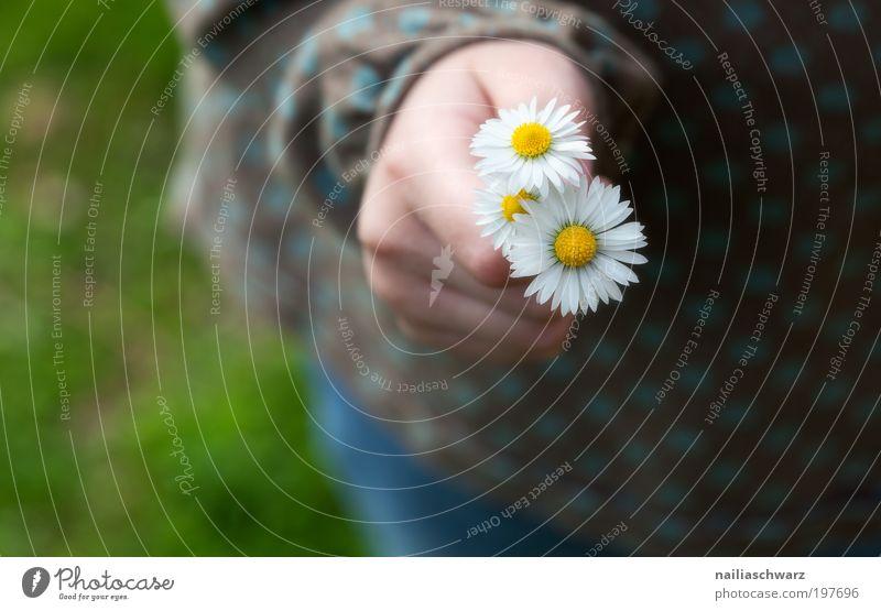 Gänseblümchen Mensch Kind Natur Pflanze weiß Blume Hand ruhig Mädchen Umwelt gelb Gefühle feminin Glück rosa Kindheit