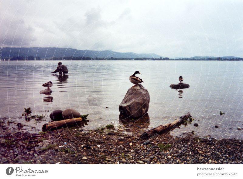 Flucht aus Entenhausen Wasser ruhig Wolken Einsamkeit Tier Stein See Landschaft Horizont Flügel Statue Seeufer Ente Surrealismus schlechtes Wetter