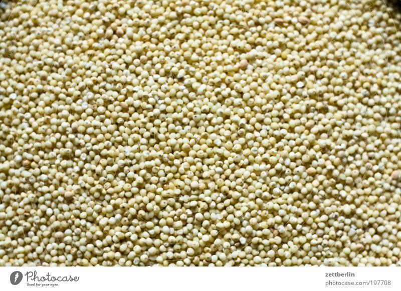Hirse Ernährung Ordnung mehrere Küche Getreide Appetit & Hunger Korn Maßeinheit Physik Vollkorn Sesam