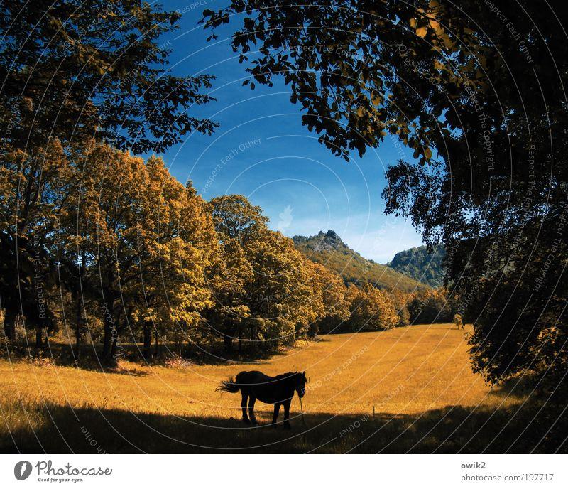 Ruhendes Pferd Natur Himmel Baum Pflanze ruhig Tier Wald Wiese Gras Frühling Denken Landschaft Umwelt Horizont Erde