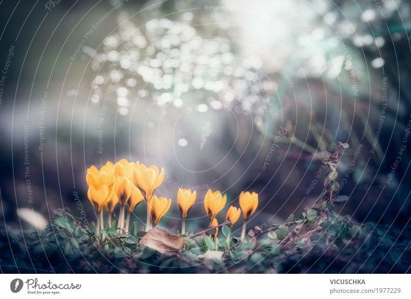 Frühling Natur Hintergrund mit gelbe Krokusse Lifestyle Garten Pflanze Schönes Wetter Blume Blatt Blüte Park Blühend weich Design Frühlingsgefühle