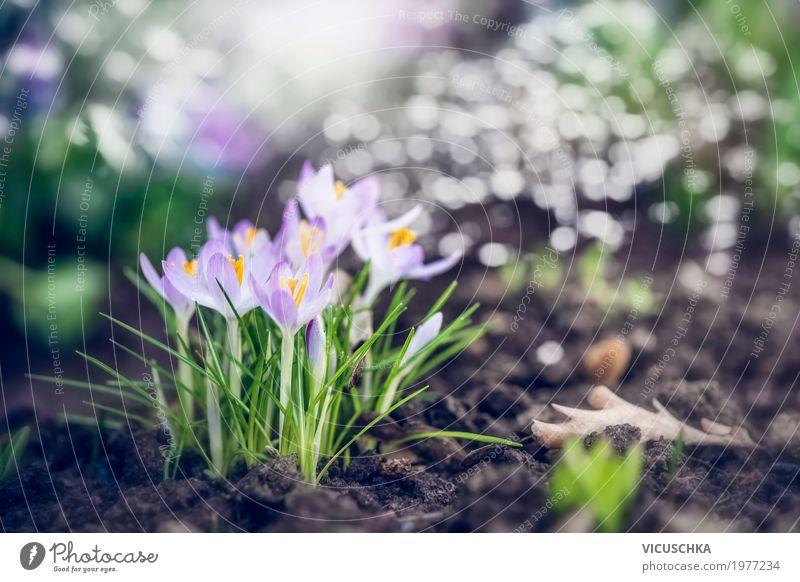 Frühlingsgarten oder Park mit ersten Krokusse Natur Pflanze schön Blume Blatt Leben gelb Lifestyle Blüte Liebe Hintergrundbild Garten Design Blühend