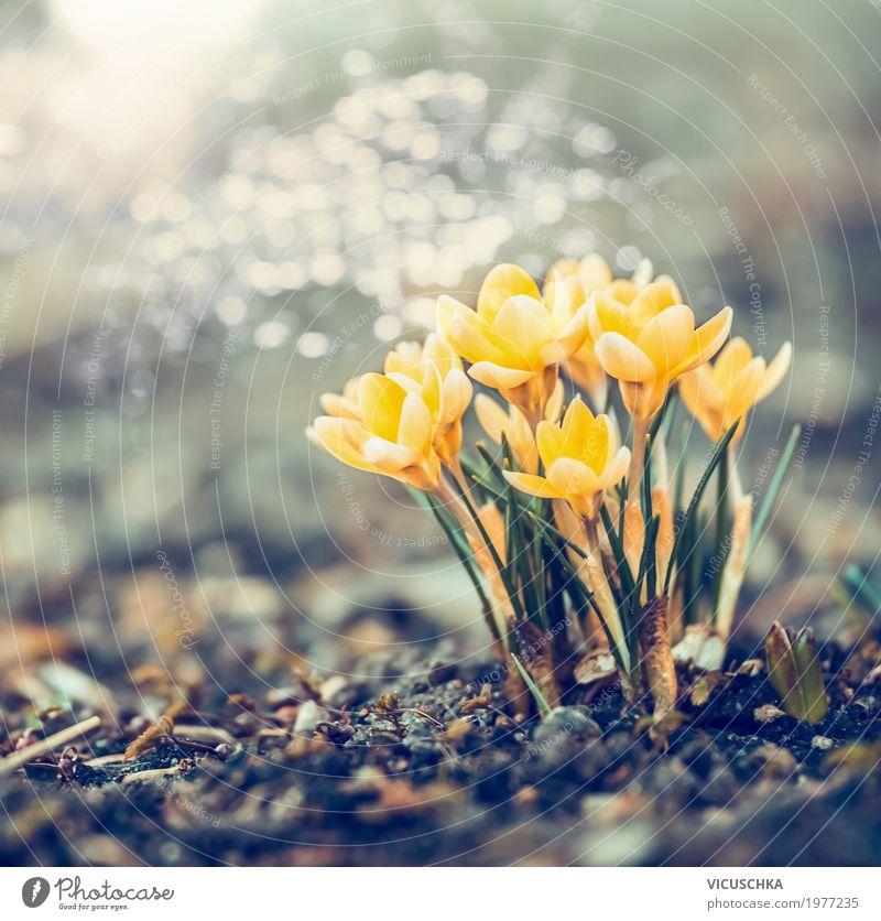 Frühling Natur mit gelbe Krokusse Lifestyle Design Garten Landschaft Pflanze Schönes Wetter Blume Blatt Blüte Park Blühend weich Hintergrundbild