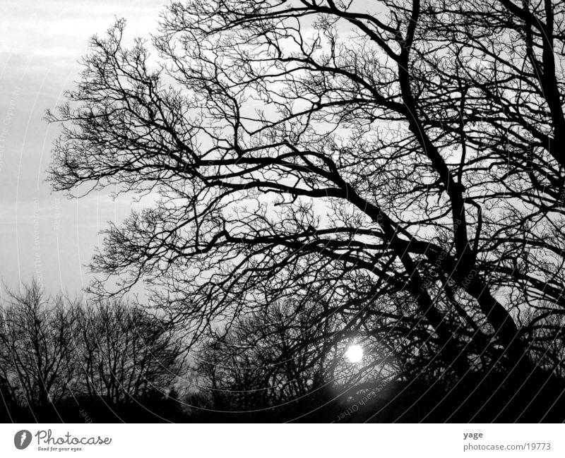 sunset Baum Sonne Sonnenuntergang