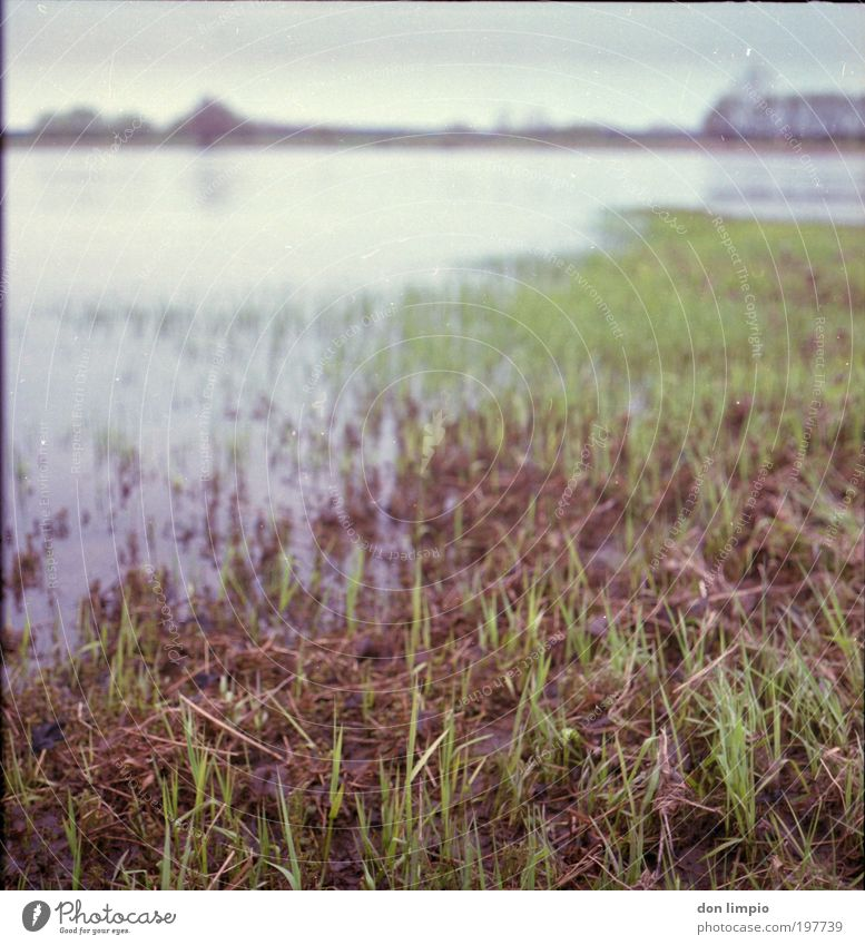 die Elbe Natur grün ruhig Wiese Gras Frühling Landschaft Umwelt Fluss analog Flussufer fließen Klimawandel Grünpflanze Gewässer