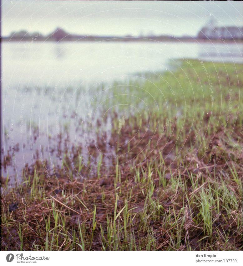 die Elbe Umwelt Natur Landschaft Frühling Klimawandel schlechtes Wetter Gras Grünpflanze Wiese Flussufer Heinrichsberg Menschenleer grün ruhig Mittelformat