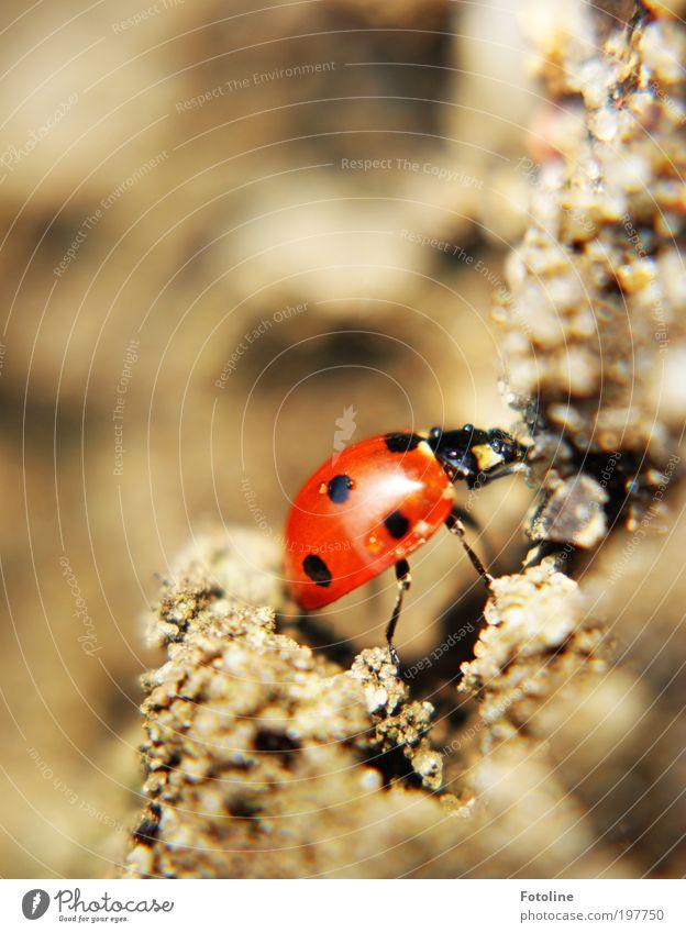 * 200 * Jubi-Multi -- Das schaffst du Kleiner -- Umwelt Natur Landschaft Tier Urelemente Erde Sand Wasser Wassertropfen Sonne Frühling Sommer Klima Wetter