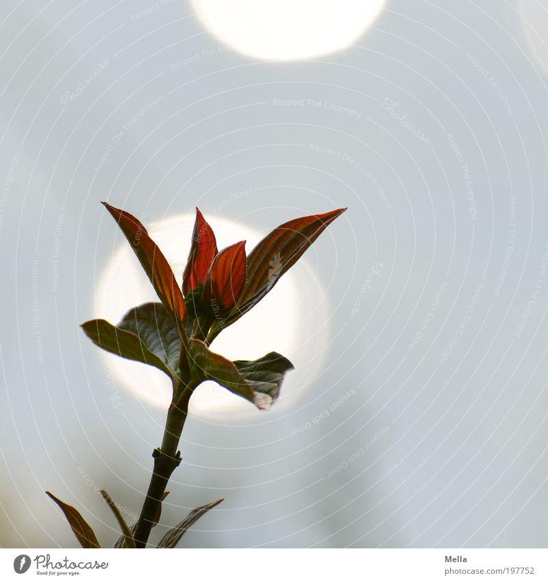 Für Fotoline Natur Pflanze Blatt Umwelt Wachstum Licht