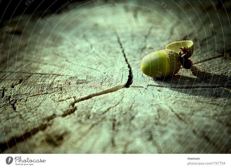 Anfang und Ende Natur Baum ruhig Erholung Umwelt Tod Leben Herbst Holz außergewöhnlich Wachstum Wandel & Veränderung Schönes Wetter Vergänglichkeit