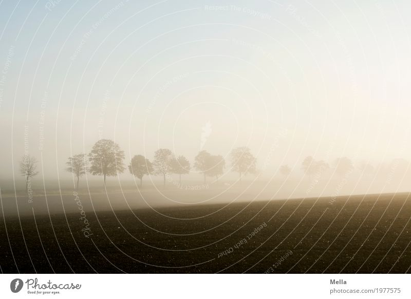 Dank photocase das hier: Früh aufstehen Himmel Natur Pflanze Baum Landschaft Erholung Einsamkeit ruhig Umwelt Straße Wege & Pfade natürlich Feld Nebel Erde Luft