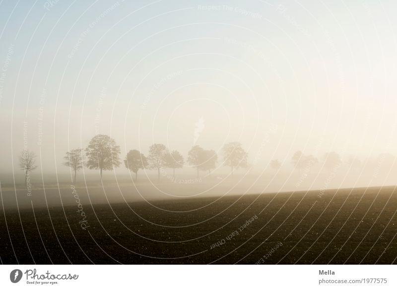 Dank photocase das hier: Früh aufstehen Umwelt Natur Landschaft Erde Luft Himmel Sonnenaufgang Sonnenuntergang Klima Nebel Pflanze Baum Feld Straße Wege & Pfade