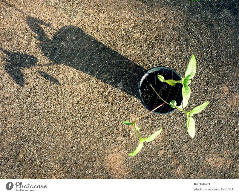 drei. sonnen. blumen. Lifestyle Design Glück schön Gesundheit Leben Freizeit & Hobby Häusliches Leben Wohnung Garten Kindergarten Gartenarbeit Landwirtschaft