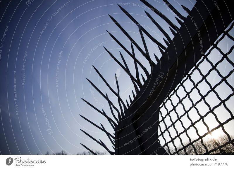 Irokesen-Gartenzaun Himmel Wolkenloser Himmel Sonne Pflanze Baum Zaun Gitter Gitternetz Stahltor Stahlzaun Spitze Stacheldrahtzaun stachelig Metall Rost Netz