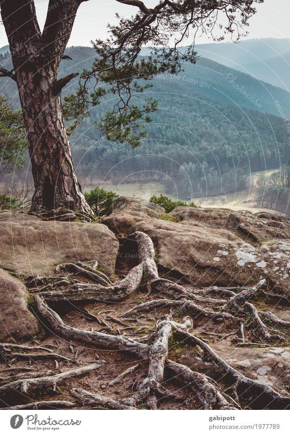 Verwurzelt Natur Pflanze Sommer Baum Landschaft Wald Berge u. Gebirge Umwelt natürlich braun Felsen Erde Kraft Schönes Wetter Hügel Urelemente