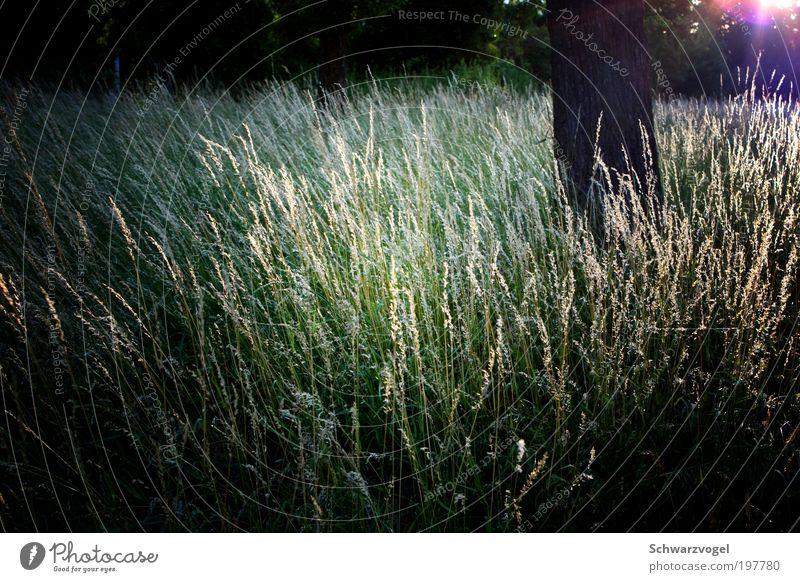 Feenhausen Natur Baum Sonne grün Pflanze Erholung Wiese Gras Glück träumen Zufriedenheit Stimmung Umwelt Hoffnung ästhetisch Wachstum