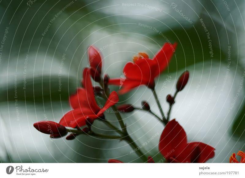 blütenzauber [LUsertreffen 04|10] Natur Blume Pflanze rot Blüte Frühling ästhetisch Wachstum Blütenknospen Frühlingsgefühle Tag Frühlingsblume Frühlingsfarbe