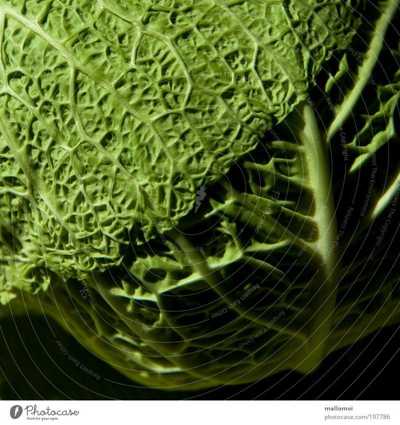vernetzt grün Pflanze Ernährung Linie Lebensmittel frisch Küche Netz Gemüse Verbindung lecker Vitamin Bioprodukte Gefäße Raum Grünpflanze