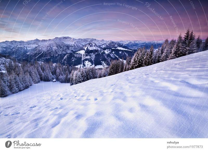 rosa Sonnenaufgang in den Winter Alpen Ferien & Urlaub & Reisen Schnee Berge u. Gebirge Natur Landschaft Himmel Baum Wald Hügel Felsen blau alpin Gipfel Düne