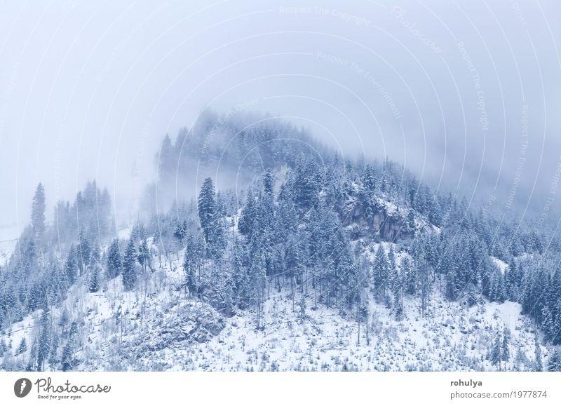 Berggipfel im Winter mit Nebel bedeckt Schnee Berge u. Gebirge Natur Landschaft Wolken Wetter Wald Hügel Alpen Gipfel wild weiß Gelassenheit alpin Fichte Kiefer