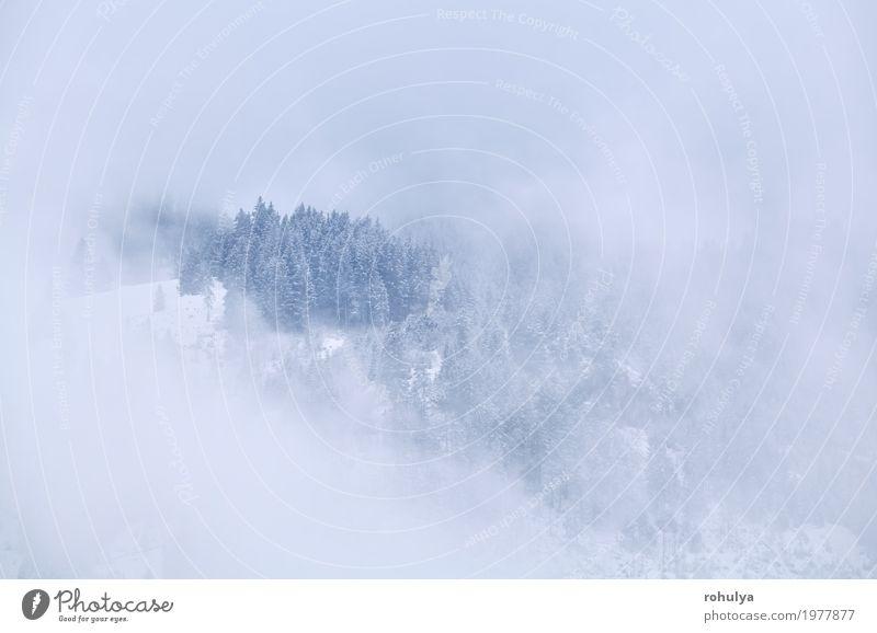 Bergspitze im Winter Nebel Ferien & Urlaub & Reisen Schnee Berge u. Gebirge Natur Landschaft Wolken Wetter Baum Wald Alpen Gipfel Gelassenheit alpin nadelhaltig