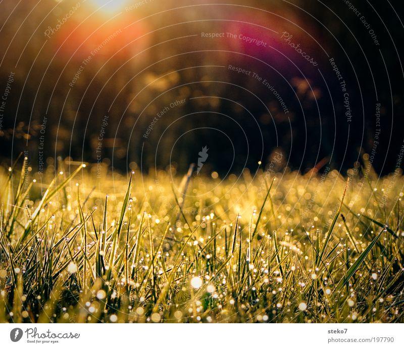 Sonnentropfen Natur Wiese Frühling Landschaft Wassertropfen frisch Wachstum Tau Gegenlicht Licht aufwachen Neuanfang